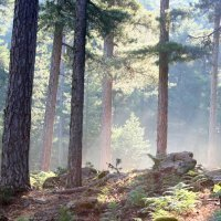 16. Corsican forest (Photo-copyright: Normand-Treier)