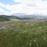 11. Species rich meadow and geographic heterogeneity (Photo-copyright: Normand-Treier)